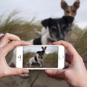 Jack Russell Texel strand